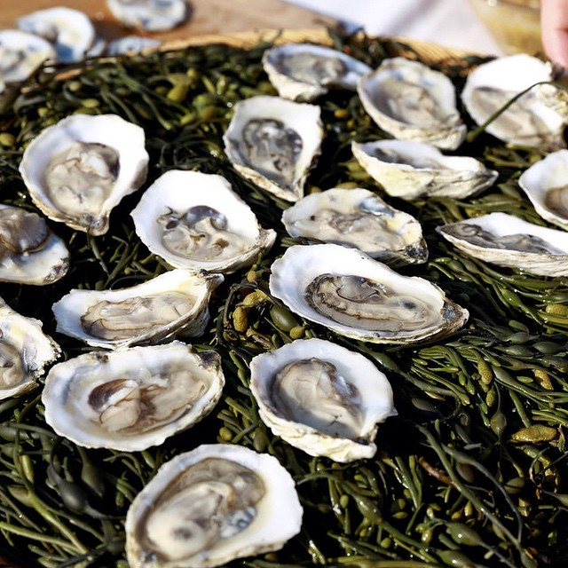 O-pioneers-Watch-Hill-oysters-from-Westerly-R.I.-served-at-@pioneerworks-Village-Fete-last-night.-Ph