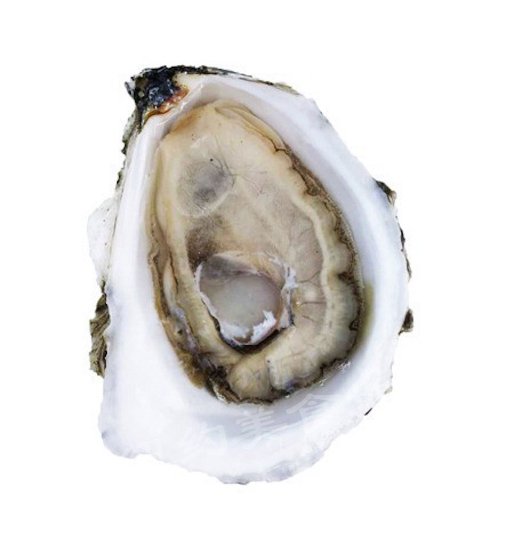 oyster-b-01