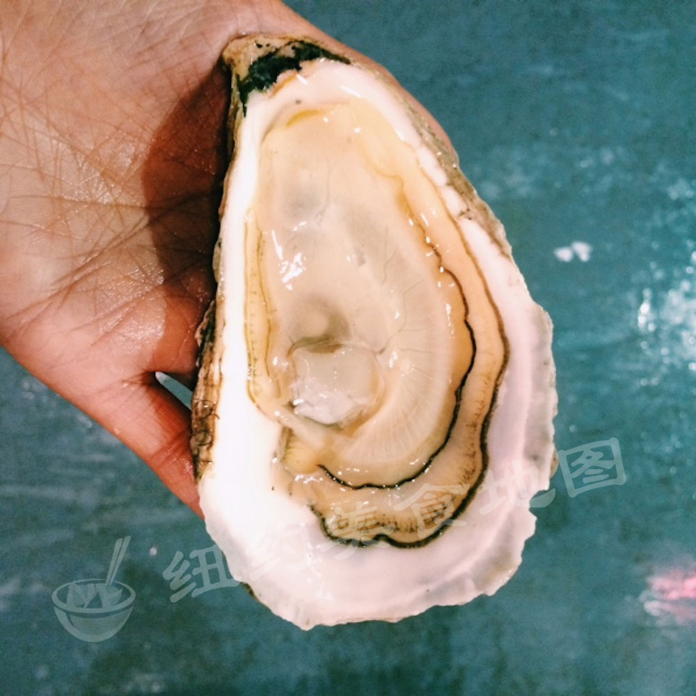 oyster-b-07