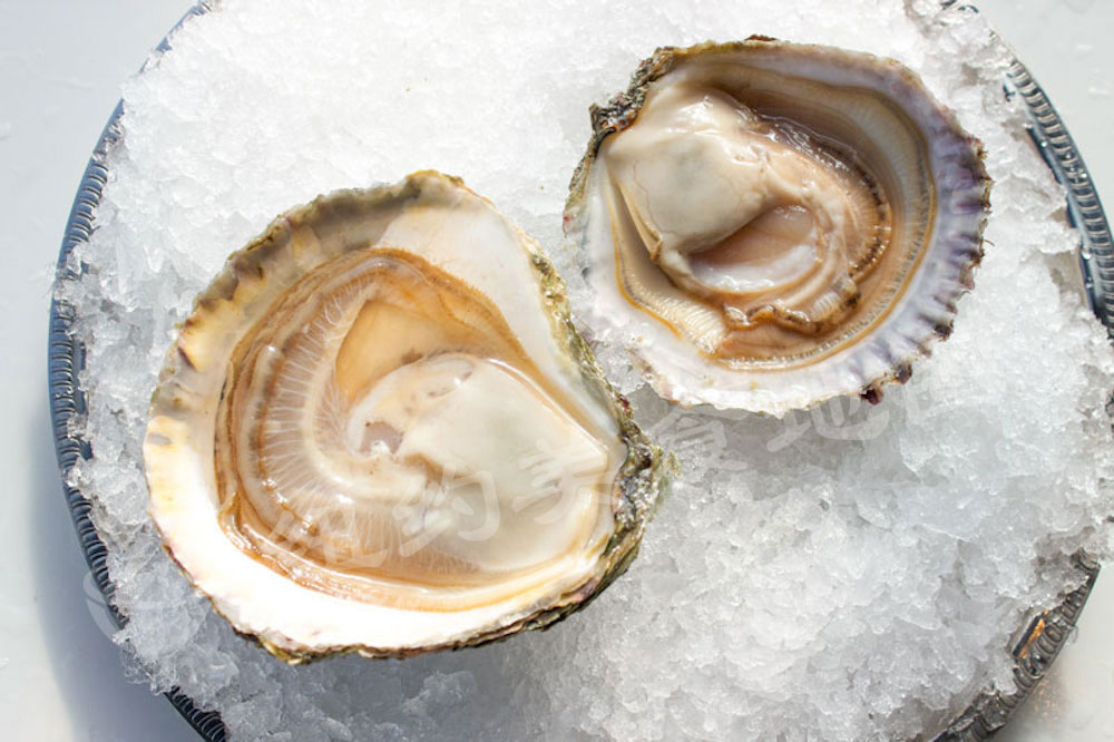 oyster-b-09