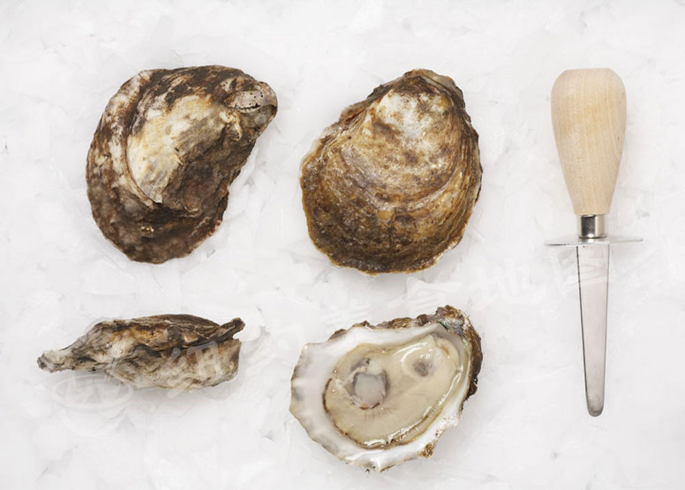 oyster-b-11