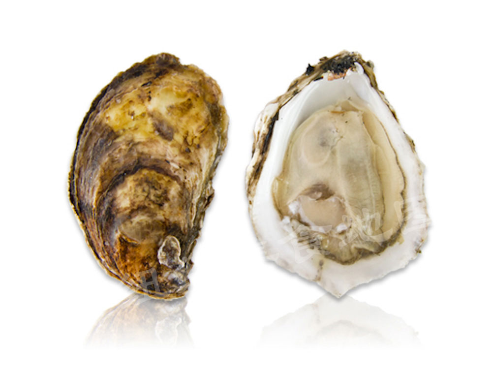 oyster-b-13