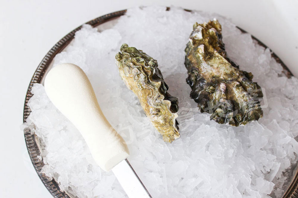 oyster-b-32