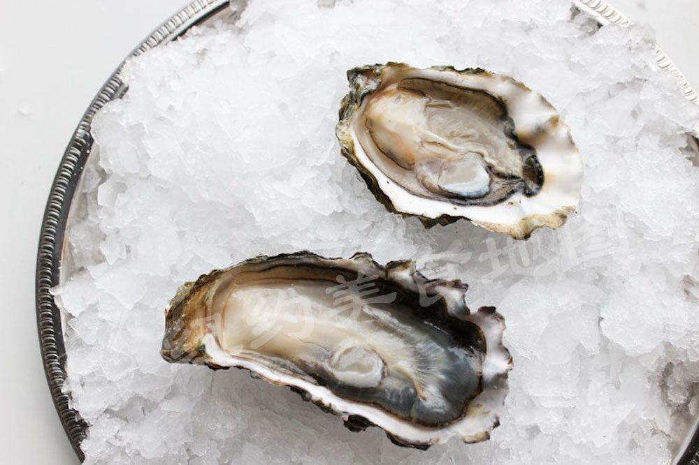 oyster-b-33