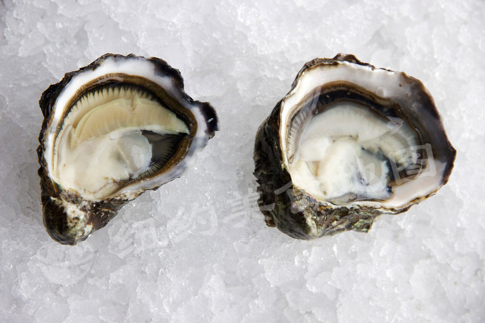 oyster-b-34