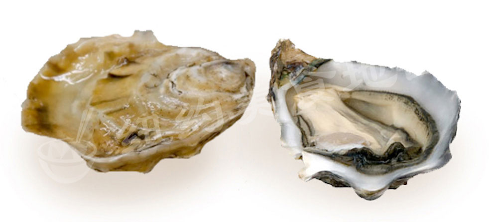 oyster-b-35