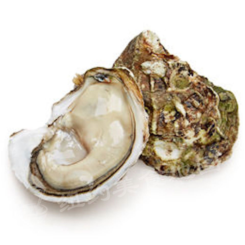 oyster-b-36