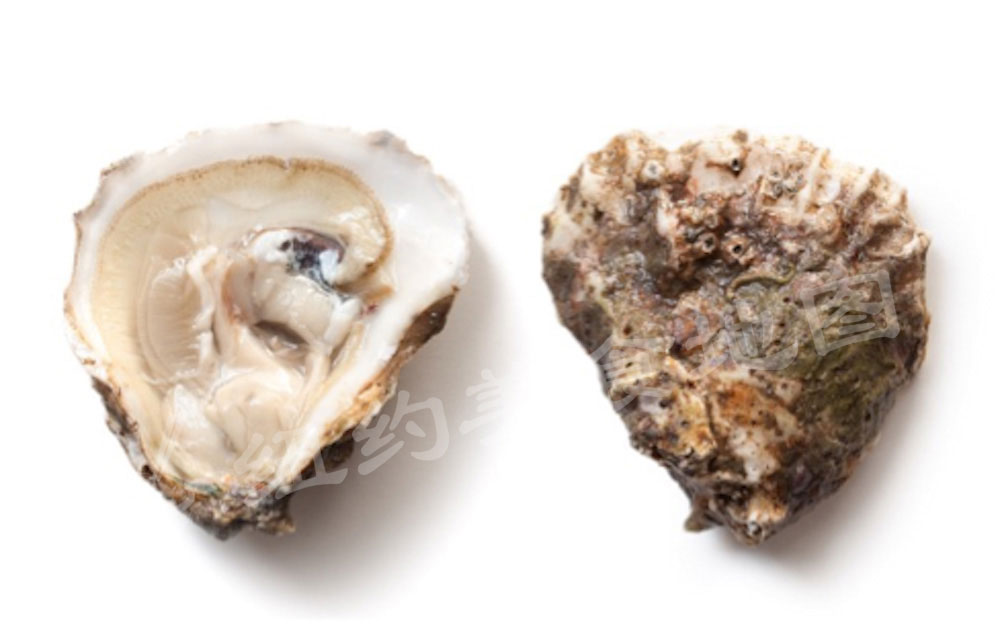 oyster-b-38
