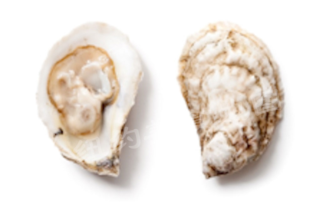 oyster-b-43