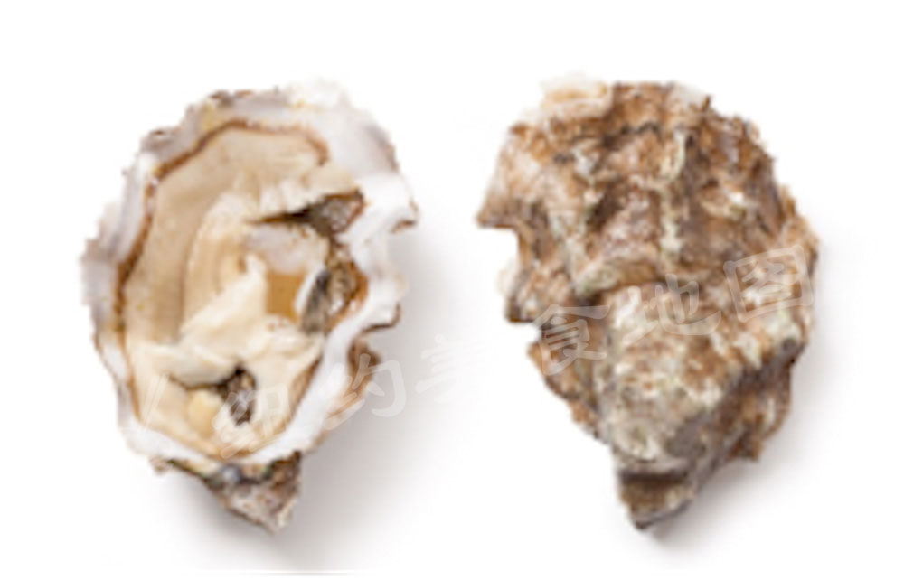 oyster-b-46