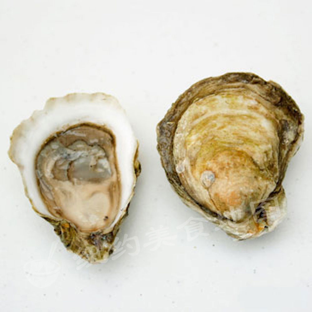 oyster-b-52