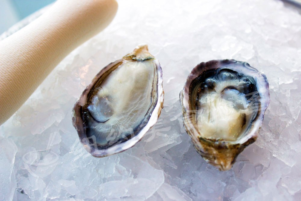 oyster-b-54