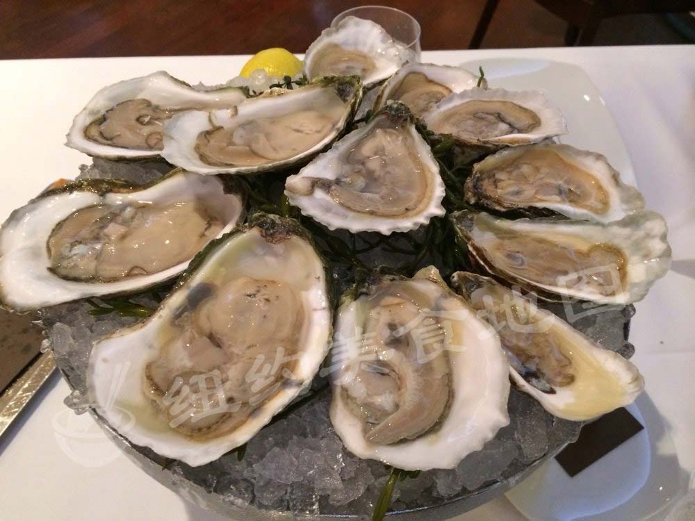 oyster-16